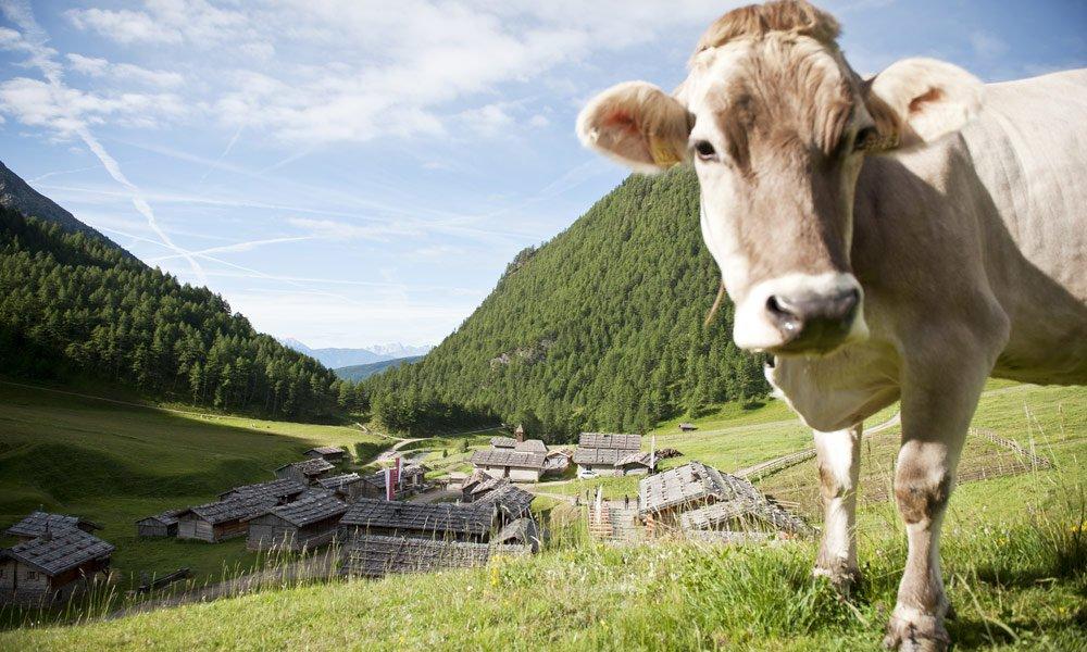 Die Fane Alm: Auf Bergtour ins Mittelalter